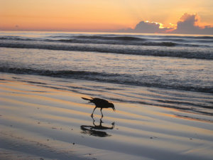 Bird along shoreline at sunrise