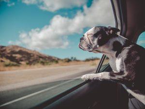 is pet insurance worth it